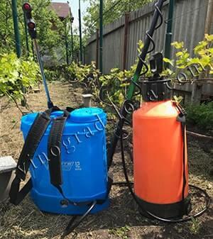 Удобрение винограда по фазам развития