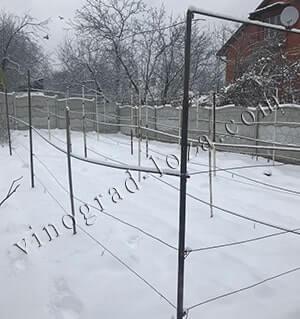 При какой температуре укрывать виноград на зиму